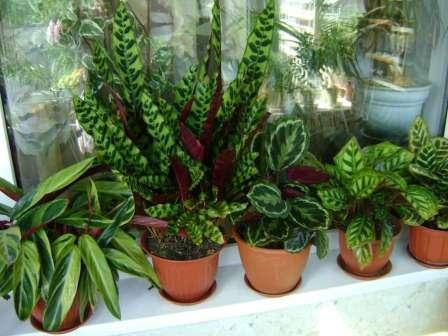 Красивые Комнатные Растения Фото И Названия