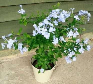 Комнатные цветы: фото и названия, уход в домашних условиях