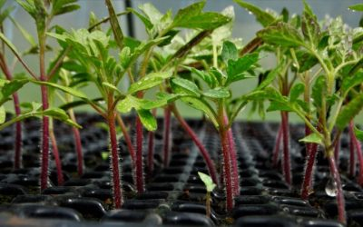 Comienza a preparar tus semilleros