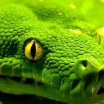 Curso gratuito de Python GIS da Universidade de Helsinki