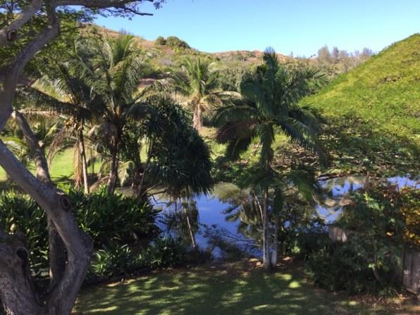 Kauai Hawaii - Kilauea - unser Ausblick zum Fluss in der Unterkunft