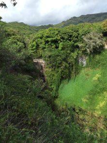 Maui Hawaii - Hana HWY - ganz schön grün