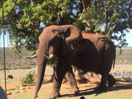 Gorah Elephant Camp - Elefant auf Hausbesuch