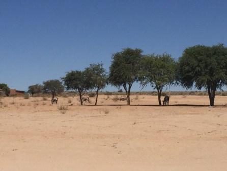 Afrika-Namibia-51