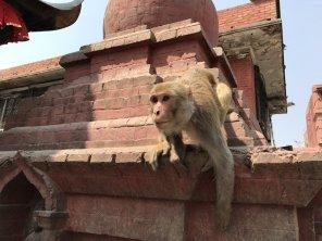 Nepal_Kathmandu_2017-L-18