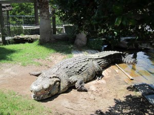 Alligator Adventures in Myrtle Beach, South Carolina