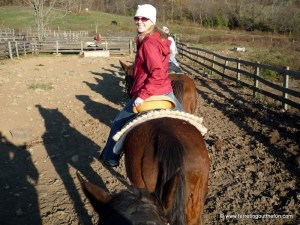 Saddle Up: My Revelations for the Year of the Horse