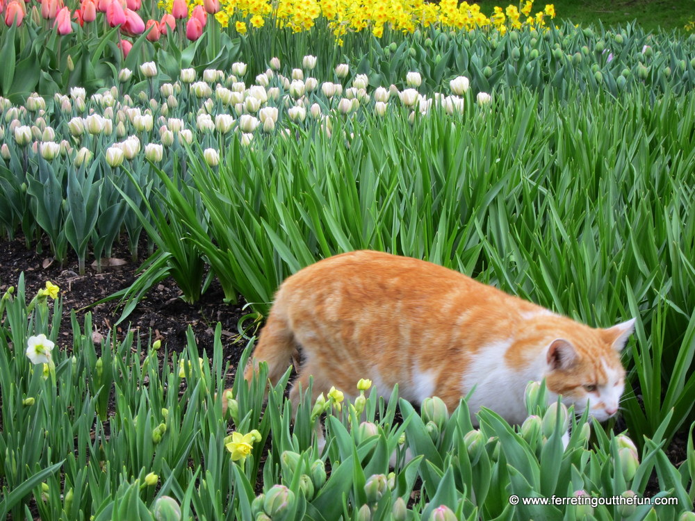 Look who I found tiptoeing through the tulips!