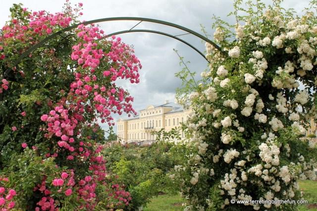 Rundale Palace Roses