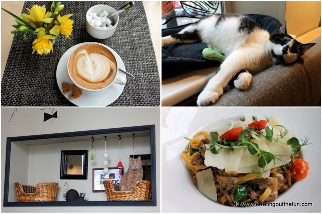 Riga Cat Cafe