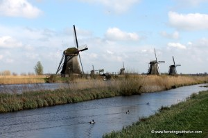 A Windswept Day at Kinderdijk, Netherlands