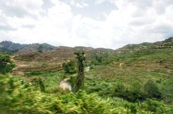 Gestern Dschungel - morgen Palmtree-Plantage. Leer geräumte Landschaft im Herzen der malaysischen Halbinsel. Wenn es nicht so aussieht, dann...