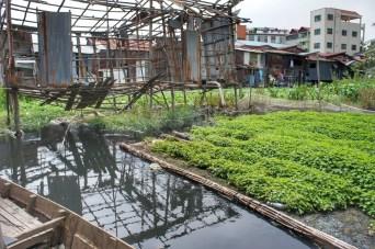 Um einen kleinen Salaire hinzuzuverdienen, bauen manche Bewohner zwischen den Häusern Gemüse an