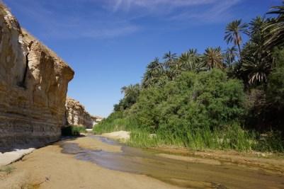 In der Wüstenoase Tamarza