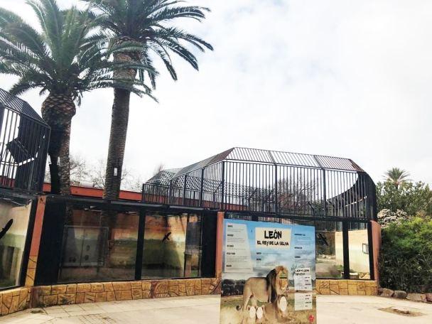 La endoterapia contra Picudo Rojo y Procesionaria en El zoo y la Ciudad de los Niños