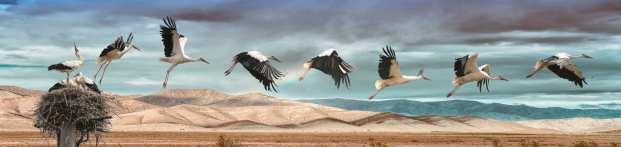 Krier Antoine Vol au Dessus d'un nid de cigogne