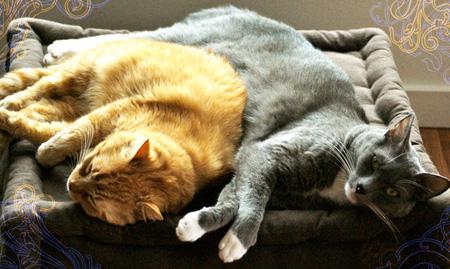 La place du lit et le sommeil feuilles de velours - Orientation du lit pour un bon sommeil ...