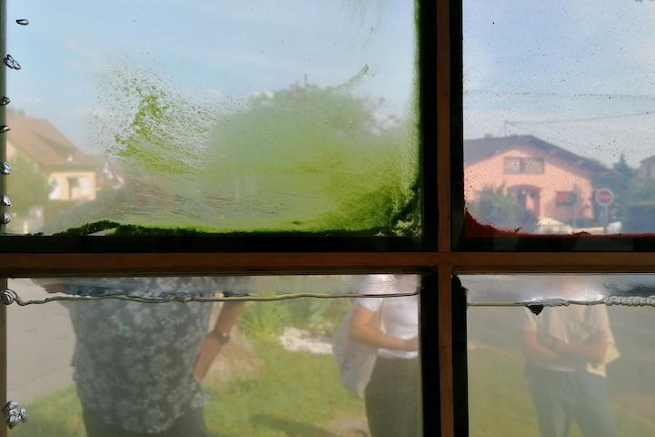 Kiosque aux algues