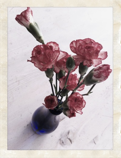 cravo-rosa.jpg