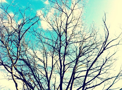 winter-sky_S.jpg