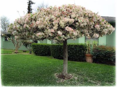 pink-tree2.jpg