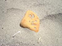 beachcomb6.JPG