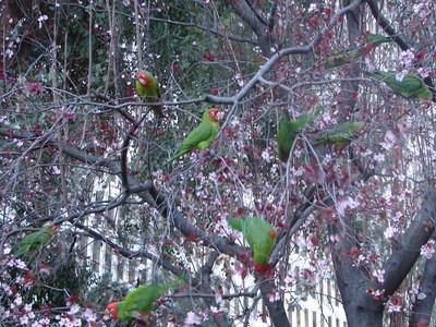 papagaiosembarcadero2.JPG