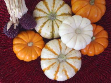 pumpkinsforfall.JPG
