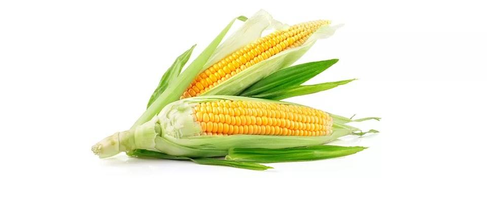 corn_-4