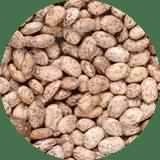 dry edible beans Pintos