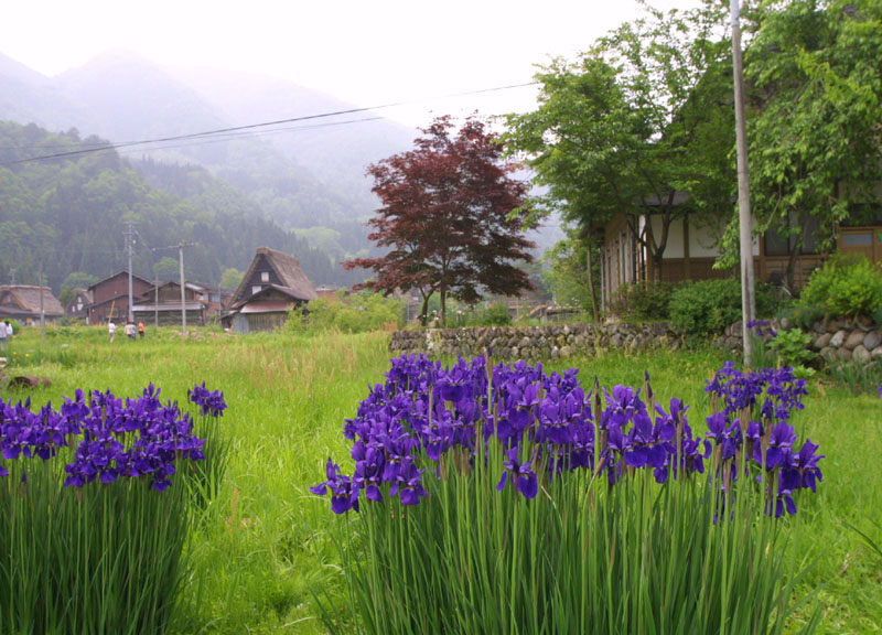 6_shirakawago54_jpg