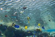 Aquarium et ses habitants ...