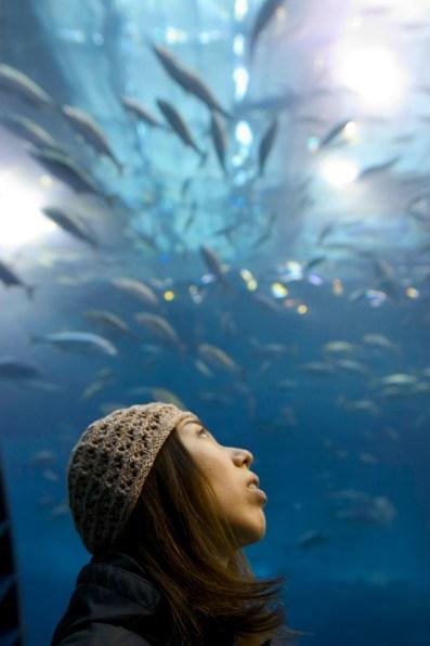 Vue sur les poissons
