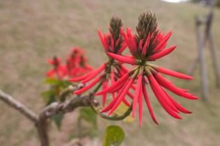 Fleurs d'Okinawa