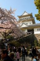 Le château de Odawara et les cerisiers à son entrée