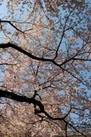 En dessous des branches