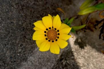 Fleur de béton