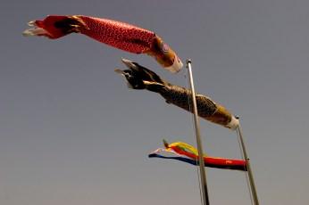 En préparation du 5 Mai, les poissons de Koinobori volent déjà au vent