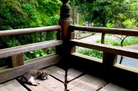 Un chat fainéant dort au pied du temple
