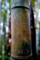 Amour écrit sur les bambous
