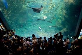 Les grandes surfaces vitrées de l'aquarium de Enoshima