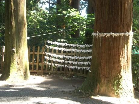 Les feuilles de voeux du temple de takachiho. Plus de details sur la ville