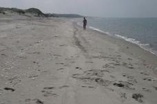 Une plage magnifique de sable blanc. Les tortues y viennent pondre la nuit.