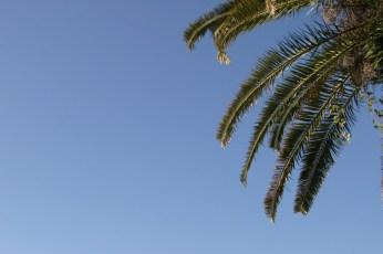 Les palmiers de Miyasaki Ken. Un petit coin de paradis sur ciel bleu.