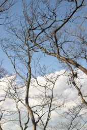 Branches (3)