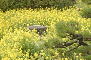 Un champ de fleurs au pied de la statue.