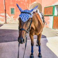 Cuffietta per cavalli all'uncinetto, tutorial