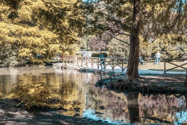 Lago parco sempione milano