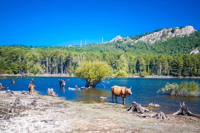 Lago dell'Ospedale Corsica