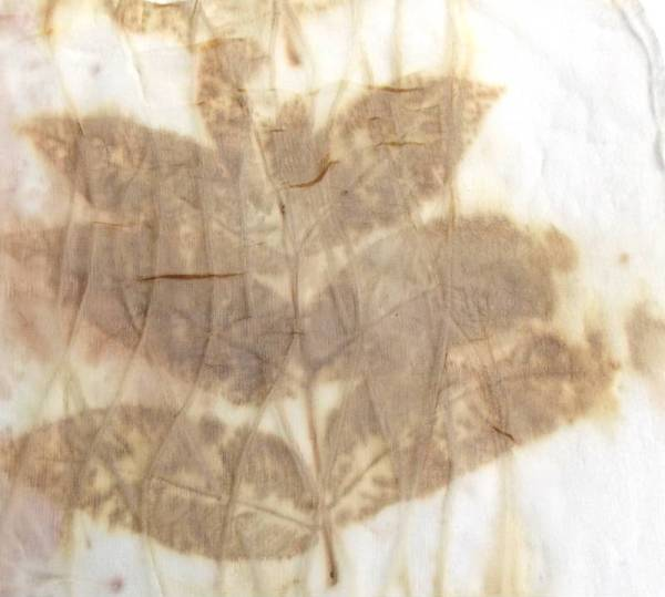 Black Walnut leaves printed on Silk Fabric without Iron Mordant
